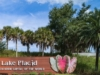 Tropical Harbor Bonus Pic-1 LP SIGN